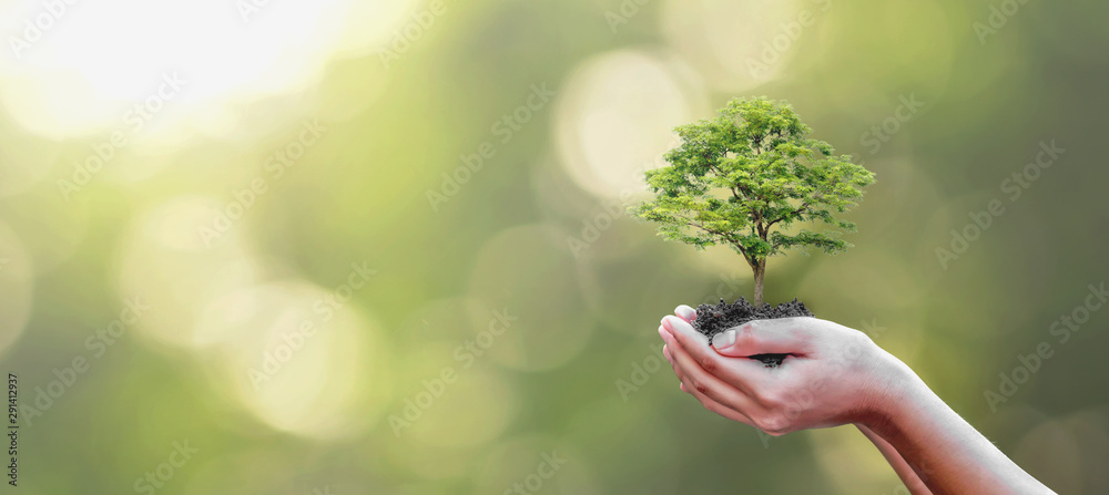 Fototapety, obrazy: Tree planting on volunteer family's hands for eco friendly and corporate social responsibility campaign concept