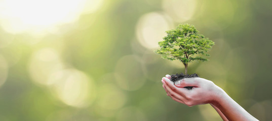 Tree planting on volunteer family's hands for eco friendly and corporate social responsibility campaign concept
