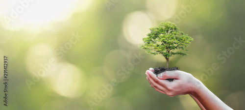 Pays d Asie Tree planting on volunteer family's hands for eco friendly and corporate social responsibility campaign concept