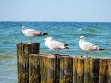 Seagulls Sitting On Groyne At ...