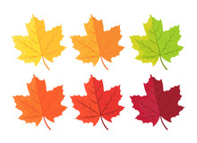 Autumn Background With Leaves. Maple Leaf In Red Yellow Brown And Green