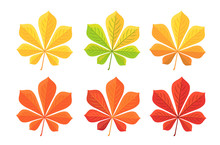 Autumn Chestnut Leaf Isolated ...