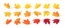 Large Set Of Autumn Maple Leaves. Vector Autumn Background With Leaves.