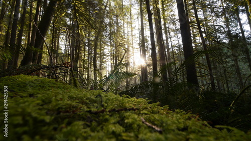 Forest with Volumetric Lights