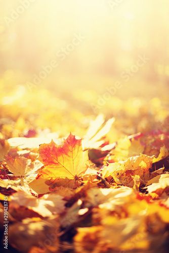 Fotografia  Autumn leaves background