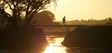 Okavango / Botswana - June 2016: Local Crossing A Bridge During Sunrise In The Wetlands Of The Okavango Delta In Botswana, Africa.
