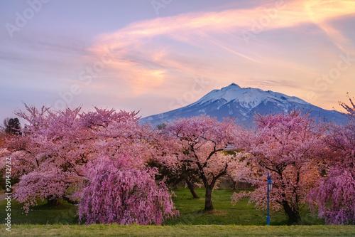 Photo 青森県・岩木山と桜の夕暮れ