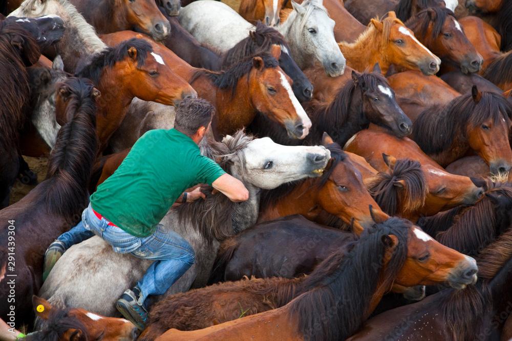Fototapety, obrazy: A Rapa das Bestas, Sabucedo, Pontevedra, Galicia