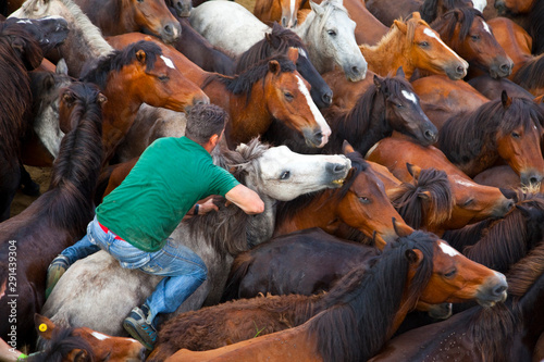 Fotografia A Rapa das Bestas, Sabucedo, Pontevedra, Galicia