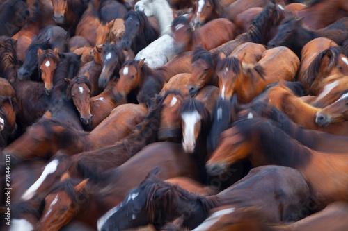 Tela A Rapa das Bestas, Sabucedo, Pontevedra, Galicia