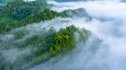 FototapetaAerial view of Asia morning mist at tropical rainforest mountain, Background of beautiful forest and mist, Aerial top view background amazon forest.