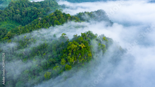 Leinwand Poster Aerial view of Asia morning mist at tropical rainforest mountain, Background of beautiful forest and mist, Aerial top view background amazon forest