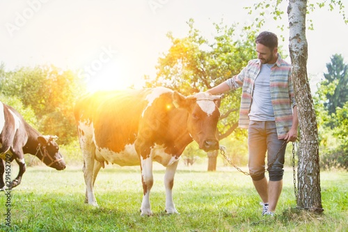 Photo  Attractive male farmer tending his cow in farm with yellow lens flare in backgro