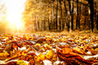 Leinwanddruck Bild - Autumn leaves background and free space for your decoration.
