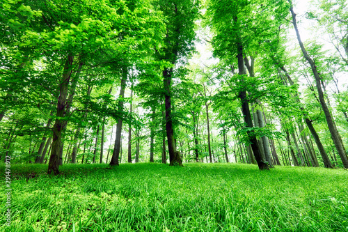 Obraz Green forest and grass with trees - fototapety do salonu