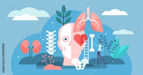 Anatomy vector illustration Fototapete