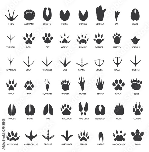 Animals footprints. Animal paws prints. Elephant and gorilla, bison and wolf. Cat, dog and deer, bear black foot tracks vector set. Illustration foot wildlife, paw of wolf print, black track bear Wall mural