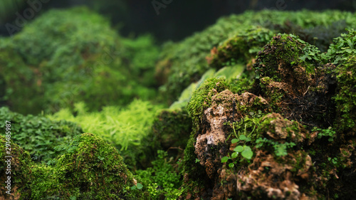 Poster Printemps Beautiful Bright Green moss grown up cover the rough stones and on the floor in the forest. Show with macro view. Rocks full of the moss texture in nature for wallpaper. soft focus.