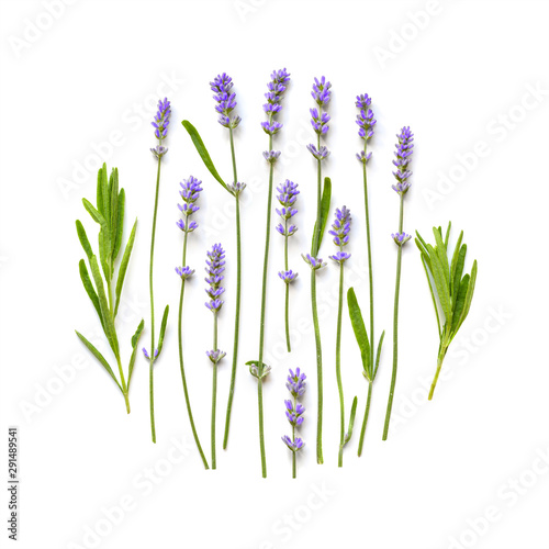 Lavender flowers round pattern on a white Canvas Print