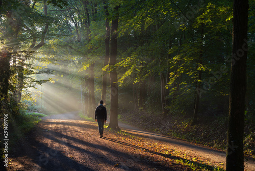 Obraz Man walking in a lane with the sunlight breaking through the trees. - fototapety do salonu
