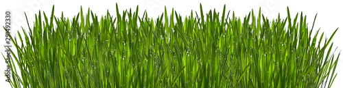 Foto auf Leinwand Gras Green grass with dew isolated on white background