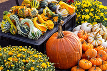 Autumn Display Of Pumpkins, Mums And Gourds, At An Outdoor Market