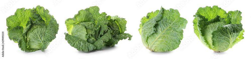 Fototapeta Set with savoy cabbage on white background