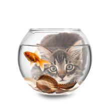 Beautiful Fishbowl On White Background