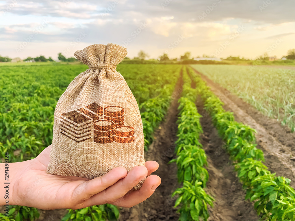 Fototapeta The farmer holds a money bag on the background of plantations. Lending and subsidizing farmers. Grants and support. Profit from agribusiness. Land value and rent. Taxes taxation. Agricultural startups