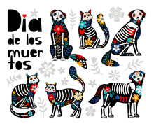 Mexican Dead Animals. Cats Sku...