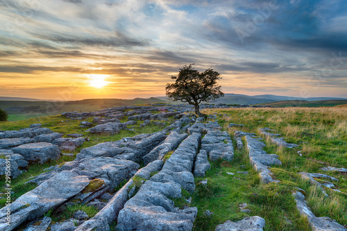 Fényképezés Sunset over a windswept Hawthorn tree growing out of a limestone pavement