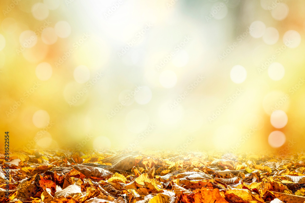Fototapety, obrazy: Brown leaves background and autumn time