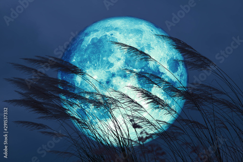 super full harvest moon on night sky back grass flower in the field Wallpaper Mural
