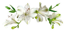 White Flowers. Floral Backgrou...