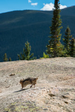 Chipmunk Posing In Rocky Mount...