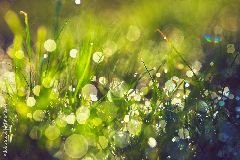Fototapety, obrazy: grass with dew drops closeup