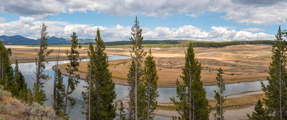 Buffalos in a Plain of the Yellowstone National Park