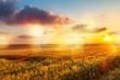 Leinwandbild Motiv Sun Shining over Golden Barley / Wheat Field at Dawn / Sunset