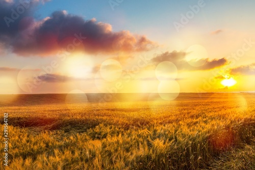 Sun Shining over Golden Barley / Wheat Field at Dawn / Sunset Canvas Print