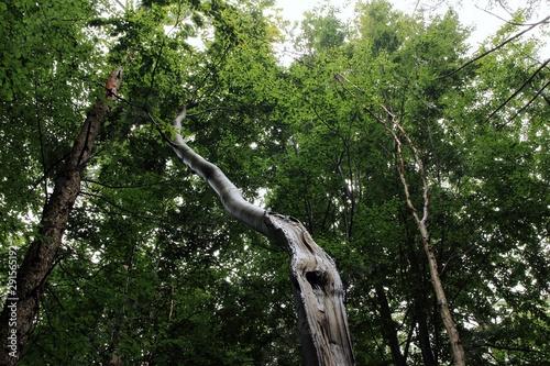 Photo der krumm gewachsene Baum