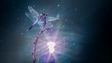 Dragonfly 76