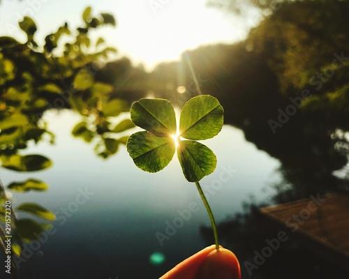 Fotografía Mano quadrifoglio con la luce del sole