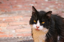 Black And White Cat With Bad Expression And Evil Eyes