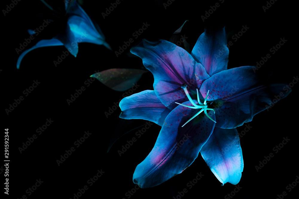 Fototapeta Ultraviolet UV Purple Sage