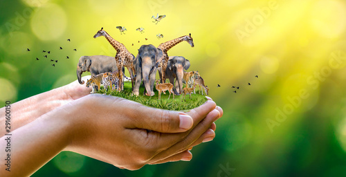 Concept Nature reserve conserve Wildlife reserve tiger Deer Global warming Food Loaf Ecology Human hands protecting the wild and wild animals tigers deer, trees in the hands green background Sun light - 291600150