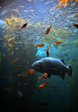 Fish swimming through a Kelp forest
