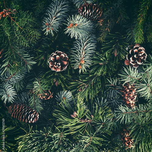 Obraz Holiday background of Christmas tree branches, spruce, juniper, fir, larch, pine cones. Xmas and New Year theme. Flat lay, top view, toning - fototapety do salonu