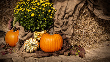 Thanksgiving Pumpkins With Flower On Burlap And Hay