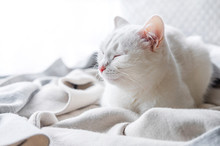 White Cat Naps On Windowsill