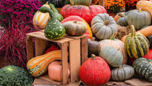 Display Of Pumpkins For Harves...